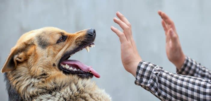 Quelles sont les causes de l'agressivité ?